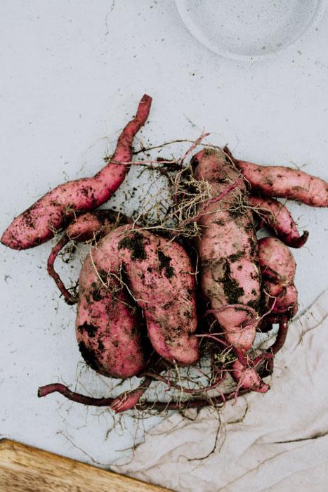 Süßkartoffeln aus dem Garten